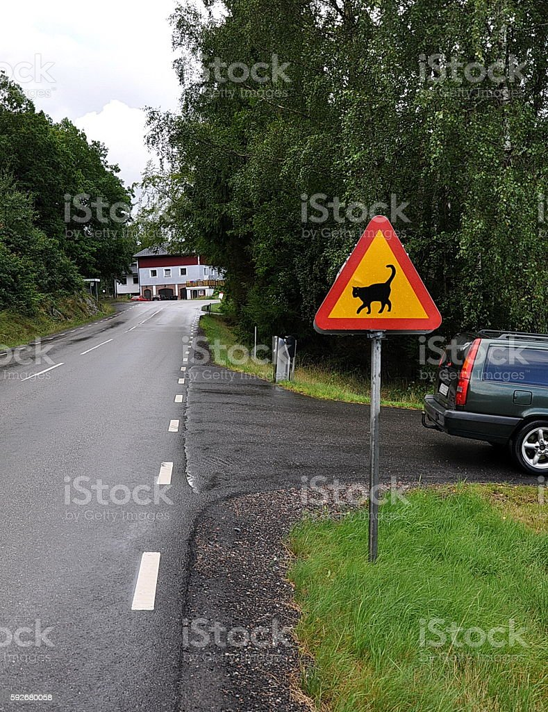 Road sign Attention, beware cat near crossroad stock photo