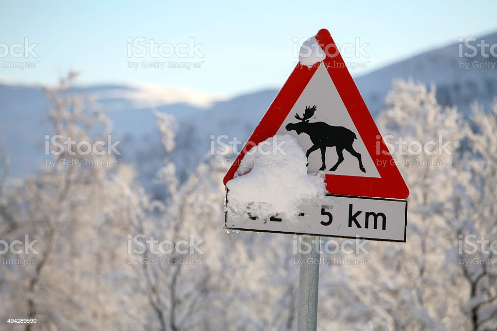 road sign attention elk stock photo