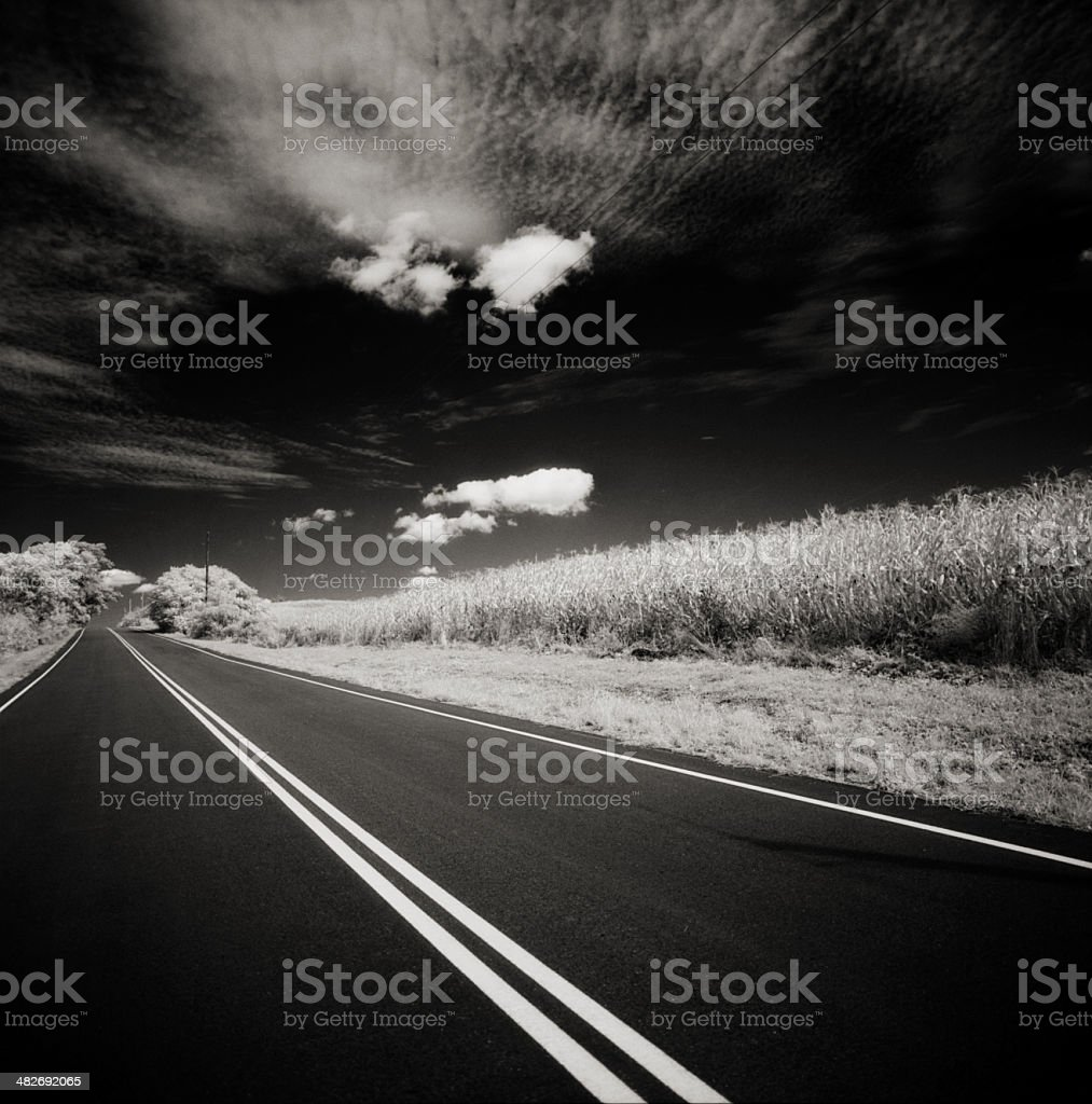 Road, Sky, and Corn Field royalty-free stock photo