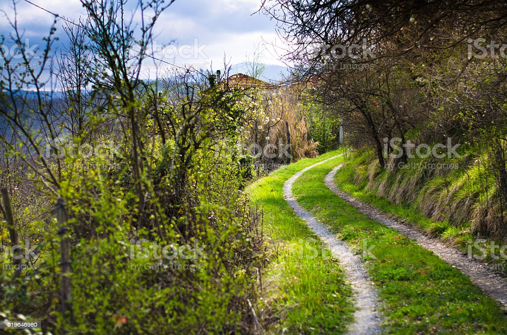 road surrounded by greenery stock photo