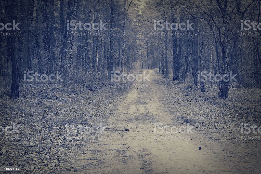 Road through a dark forest. stock photo