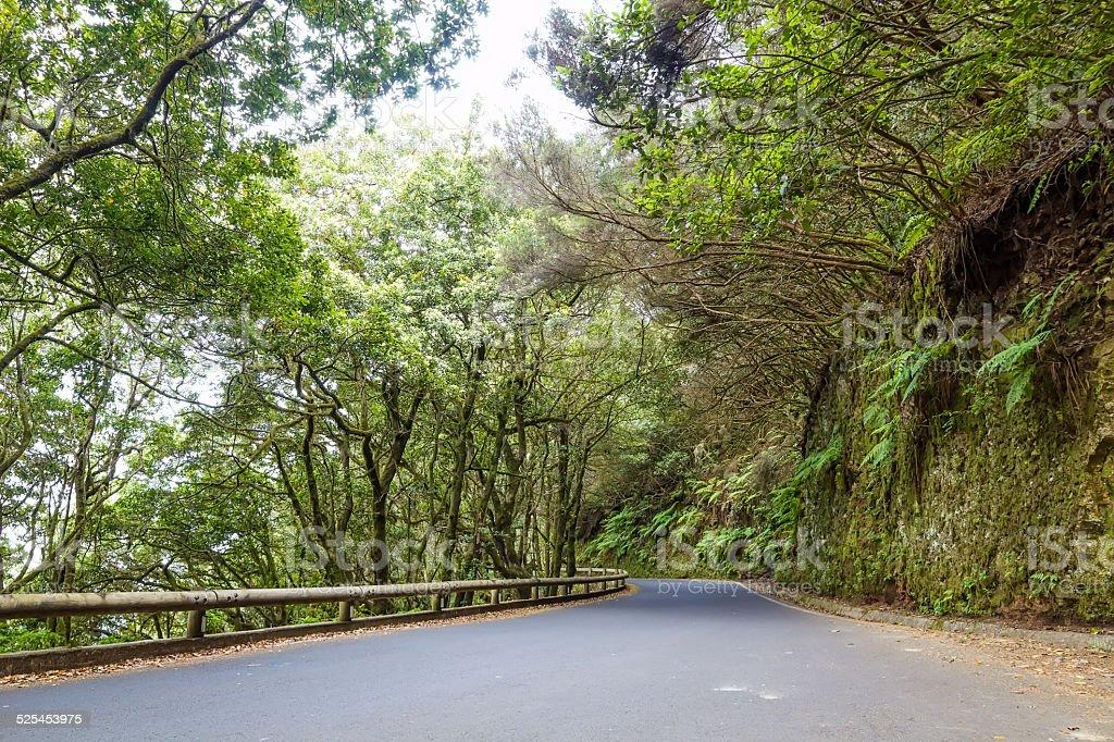 Road through Anaga park stock photo