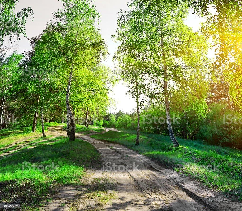 Road through birchwood stock photo