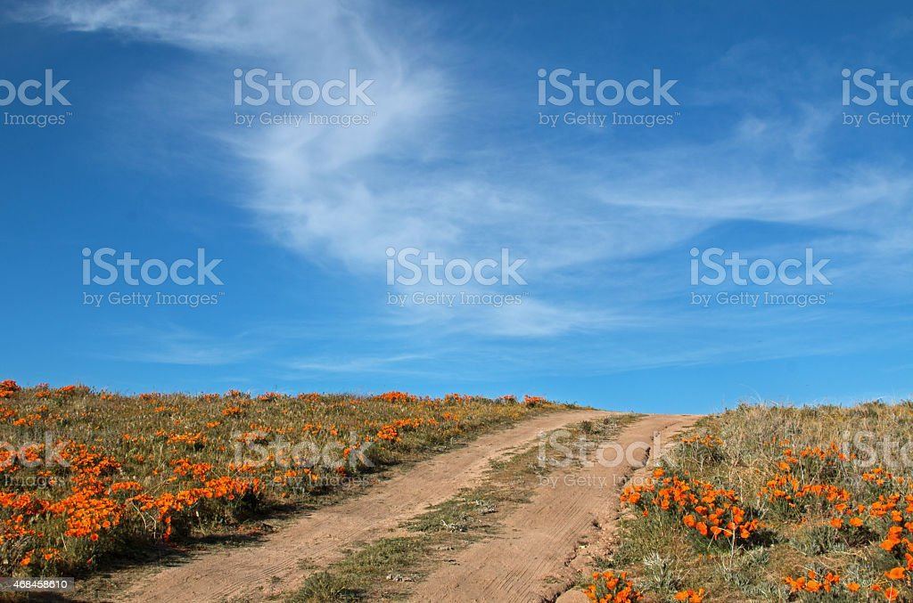 Road through California Golden Poppies in Spring stock photo