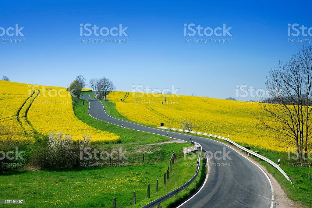 Road through Canola Fields stock photo