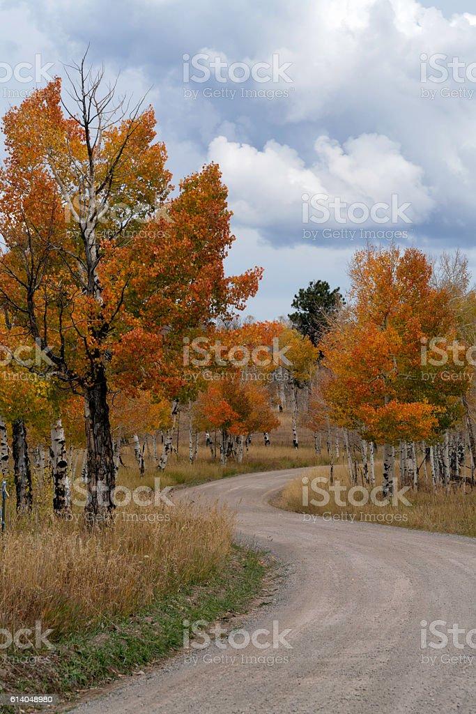Road through Fall Color Colorado stock photo
