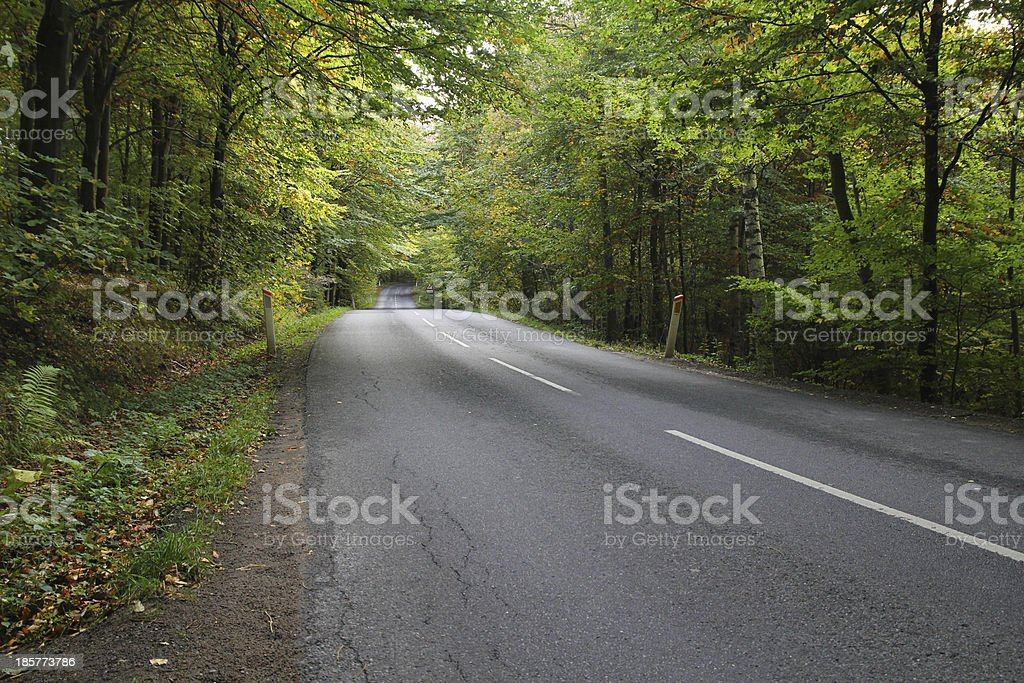 Road through forest royalty-free stock photo