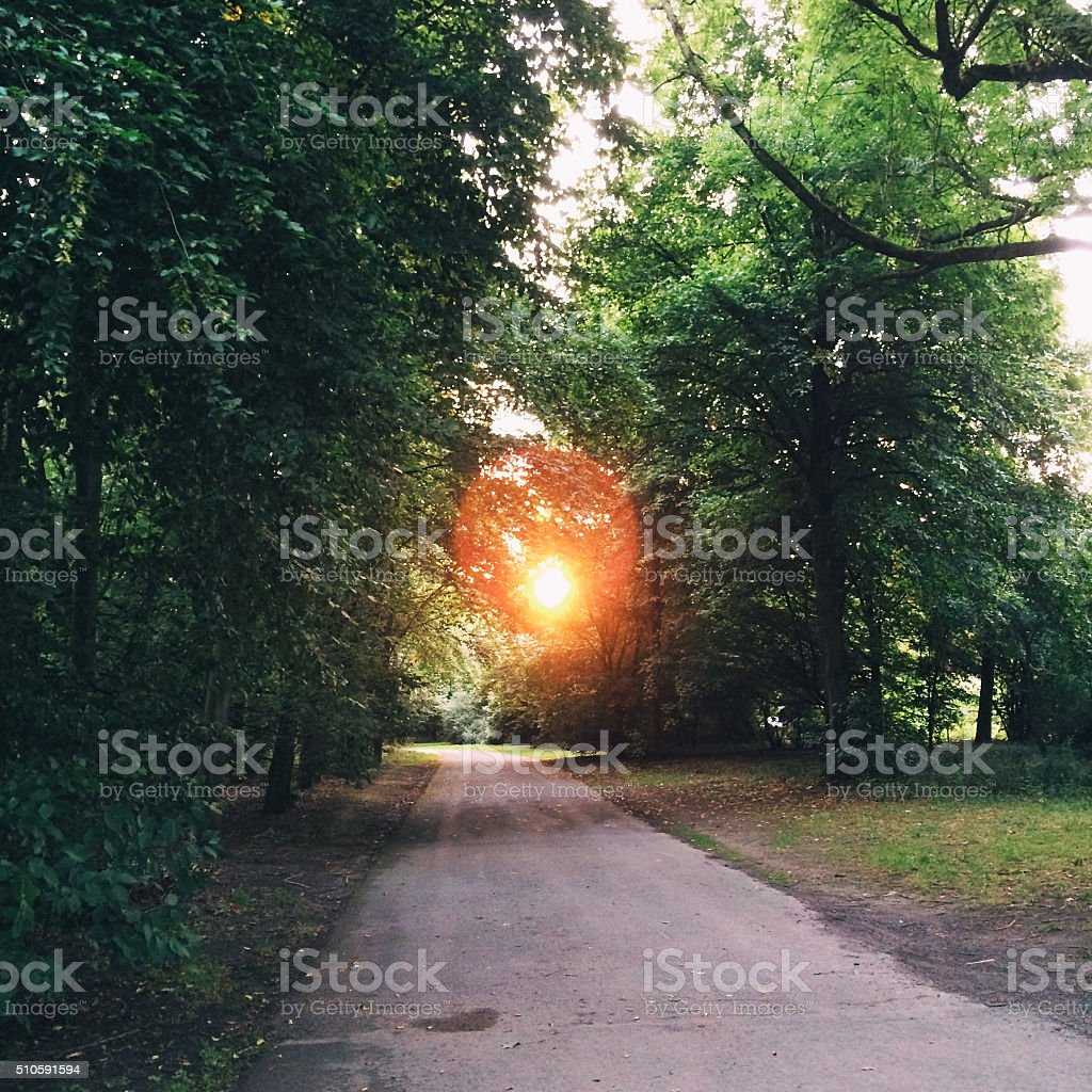 Road through forest stock photo