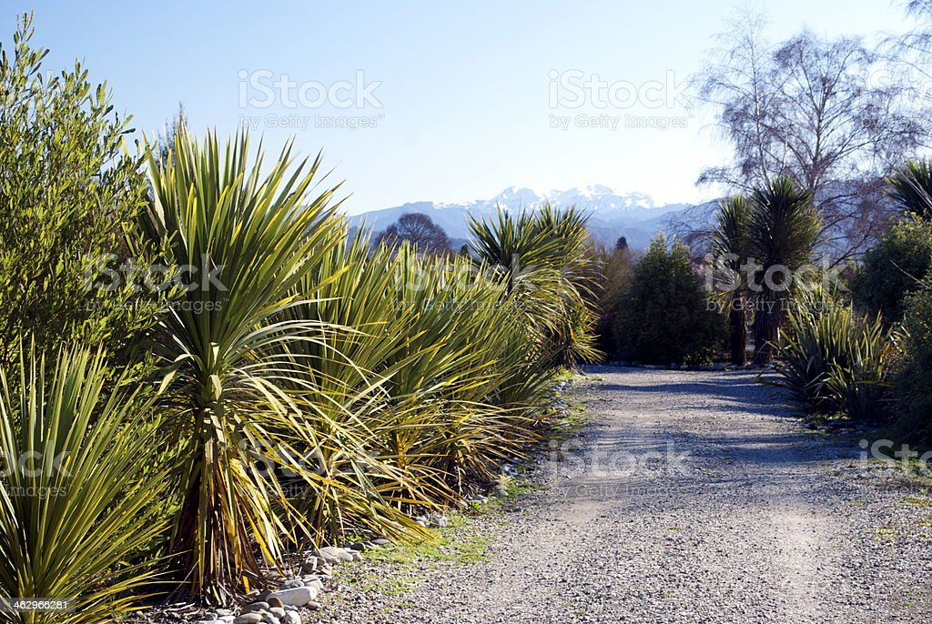 Road through New Zealand Flora royalty-free stock photo