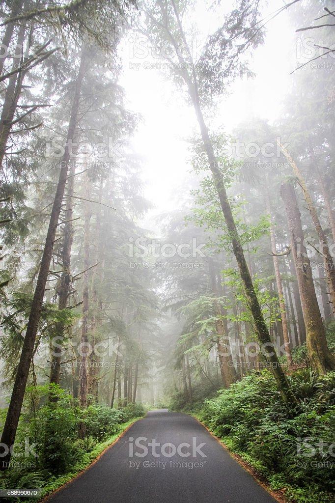 Road through Oregon Coastal Forest and Fog stock photo