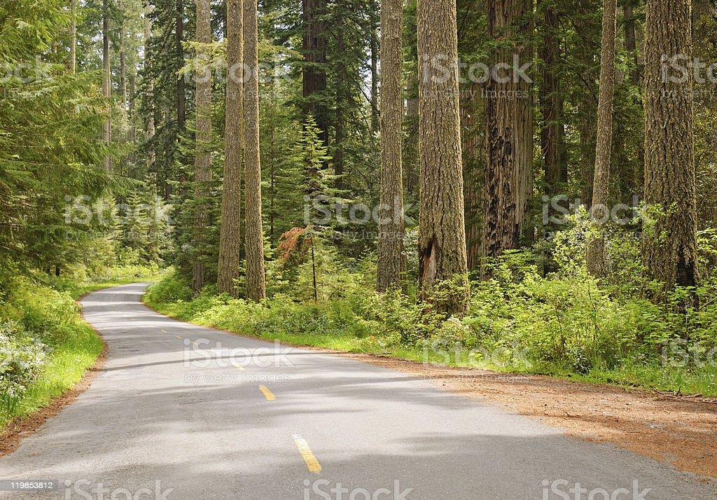 road through redwoods stock photo