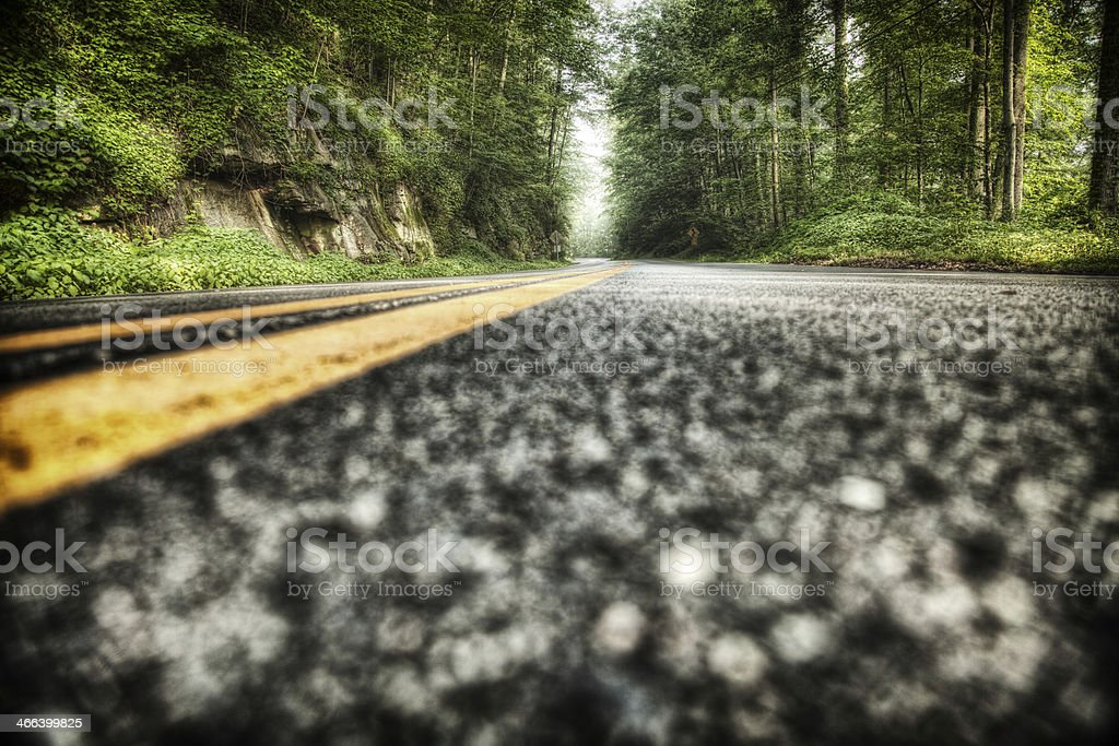 Road through Scenic Forest stock photo