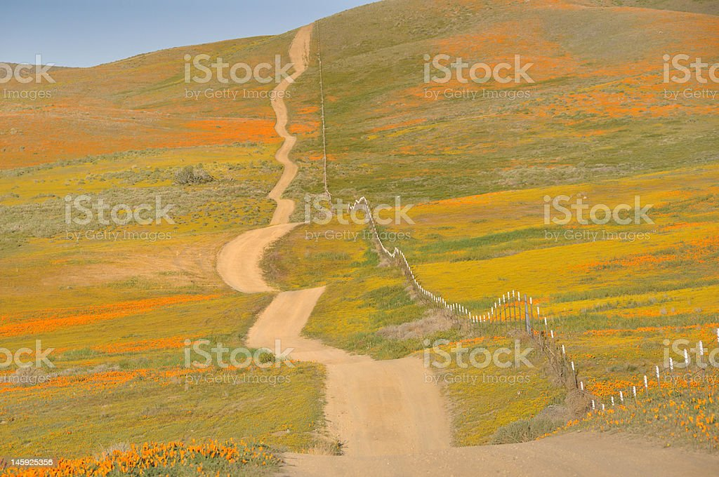 Road through spring flowers royalty-free stock photo