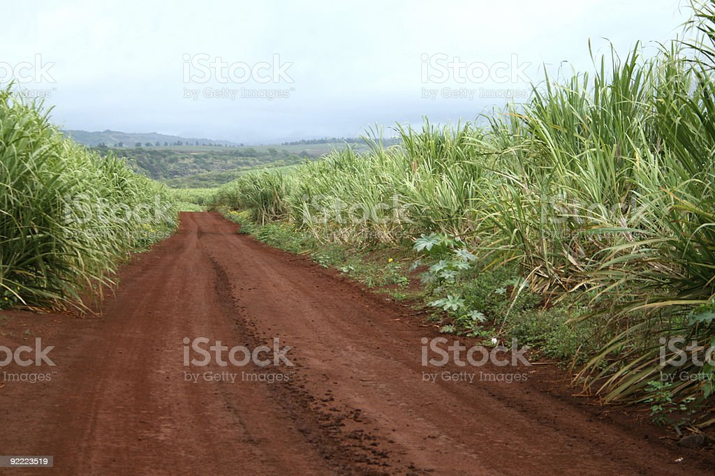 Road Through Sugarcane Field royalty-free stock photo