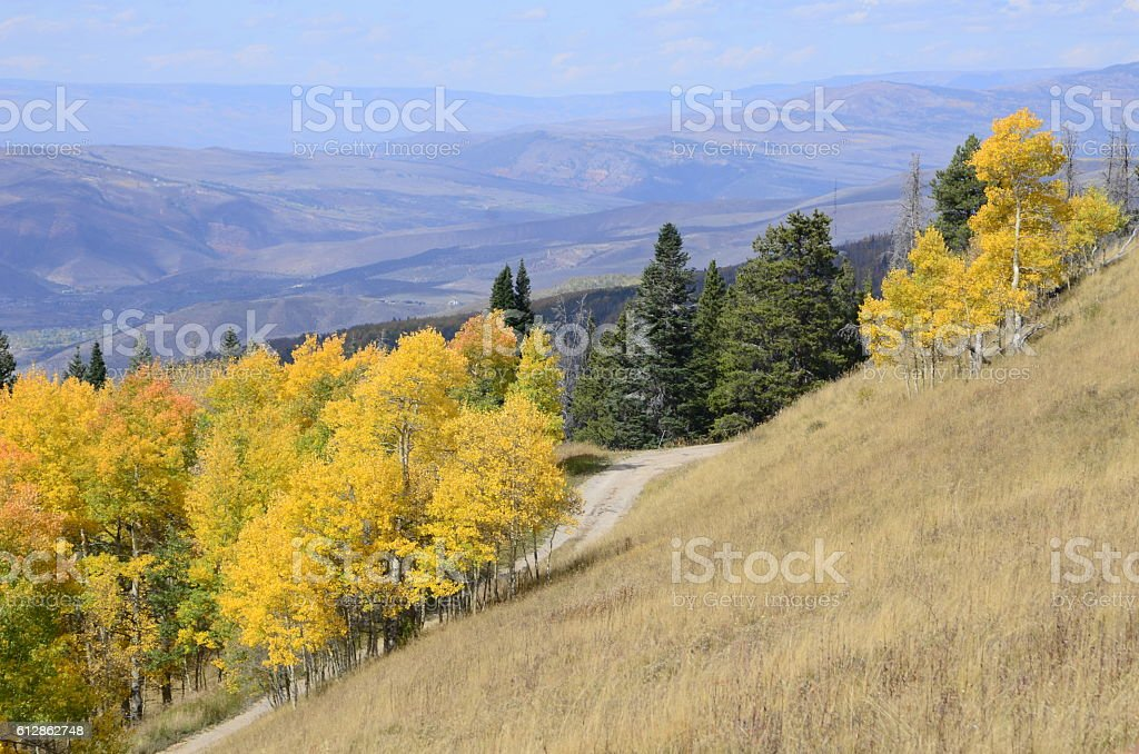 Road Through the Aspens at Peak Color in the Rockies stock photo