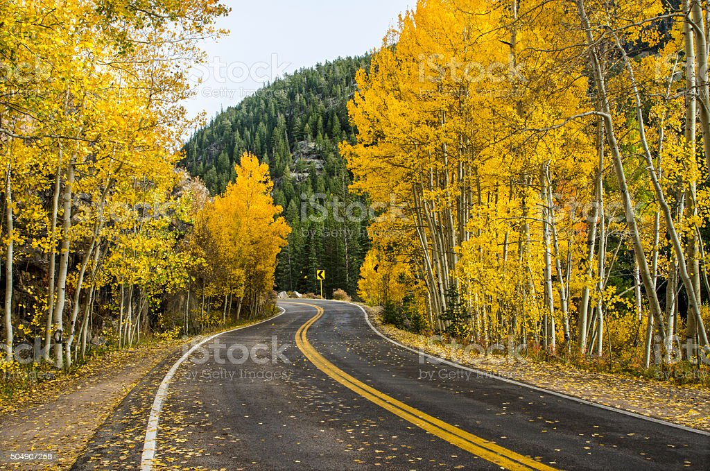Road Through the Aspens in the Colorado Rocky Mountains stock photo