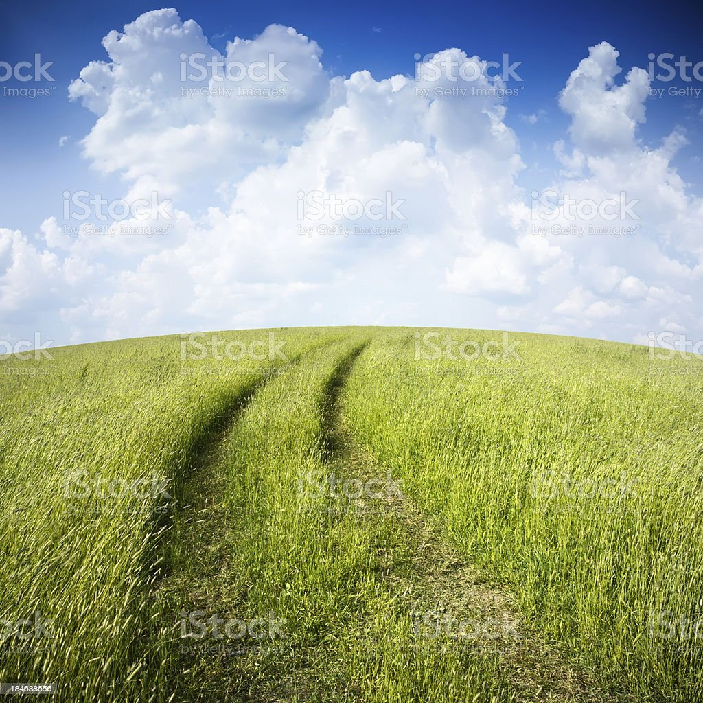 Road through the field royalty-free stock photo