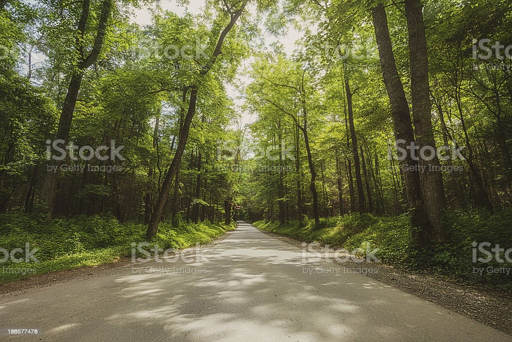 road through the forest stock photo