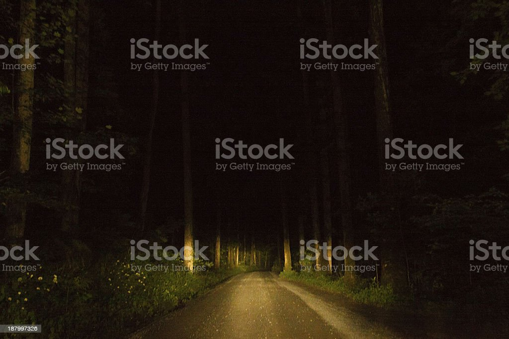 Road Through the Forest royalty-free stock photo