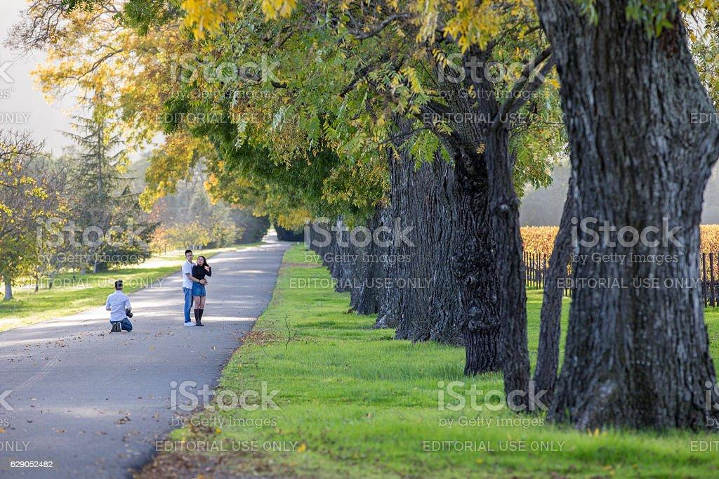 Road through the Napa Valley California Vineyard landscape, USA stock photo