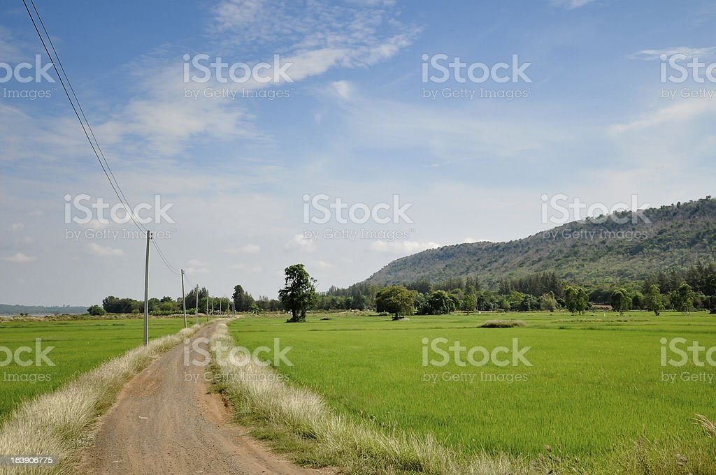 Road through the rice fields royalty-free stock photo