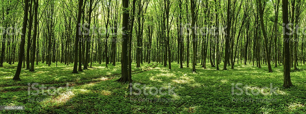 Road through the sunny spring forest stock photo