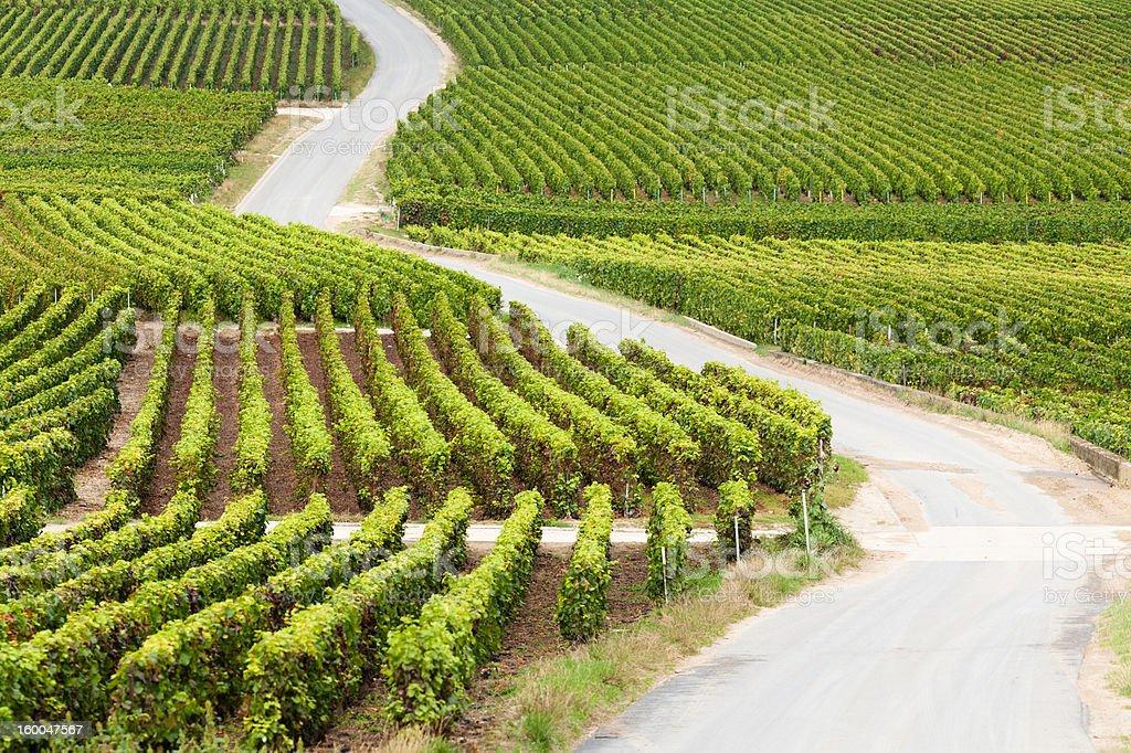 Road through the Vineyard stock photo