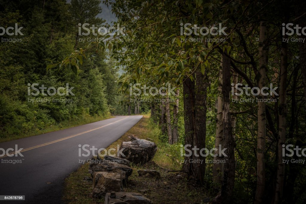 Road through the woods stock photo