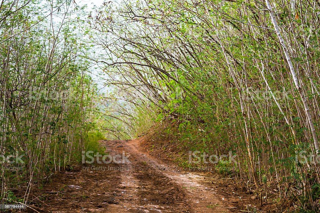 Road Through Tropical Bushes stock photo