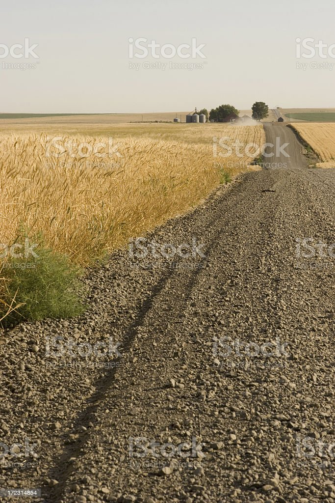 Road through wheat fields royalty-free stock photo