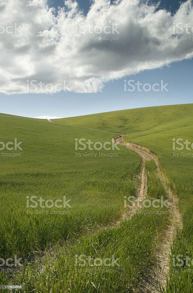 Road thru the wheat fields royalty-free stock photo
