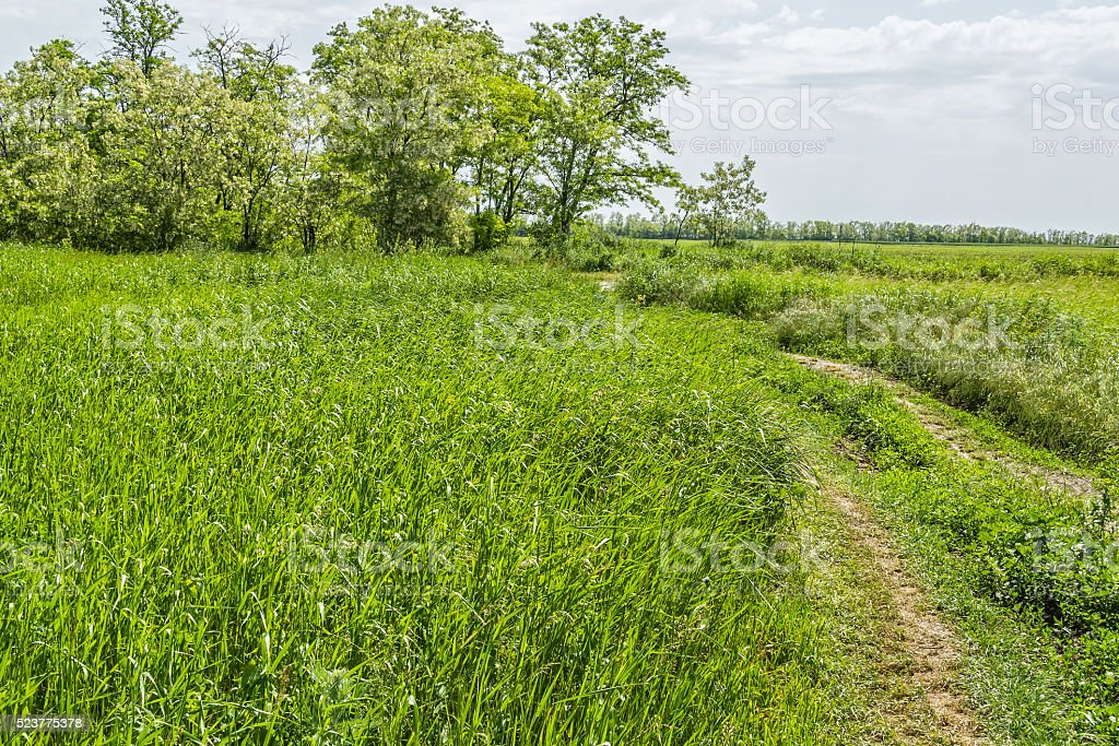Road to a wild pitch and flowering acacia trees stock photo