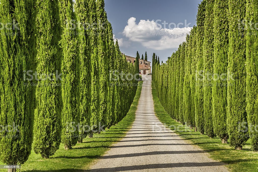 Road to agritourism in Tuscany between cypresses stock photo