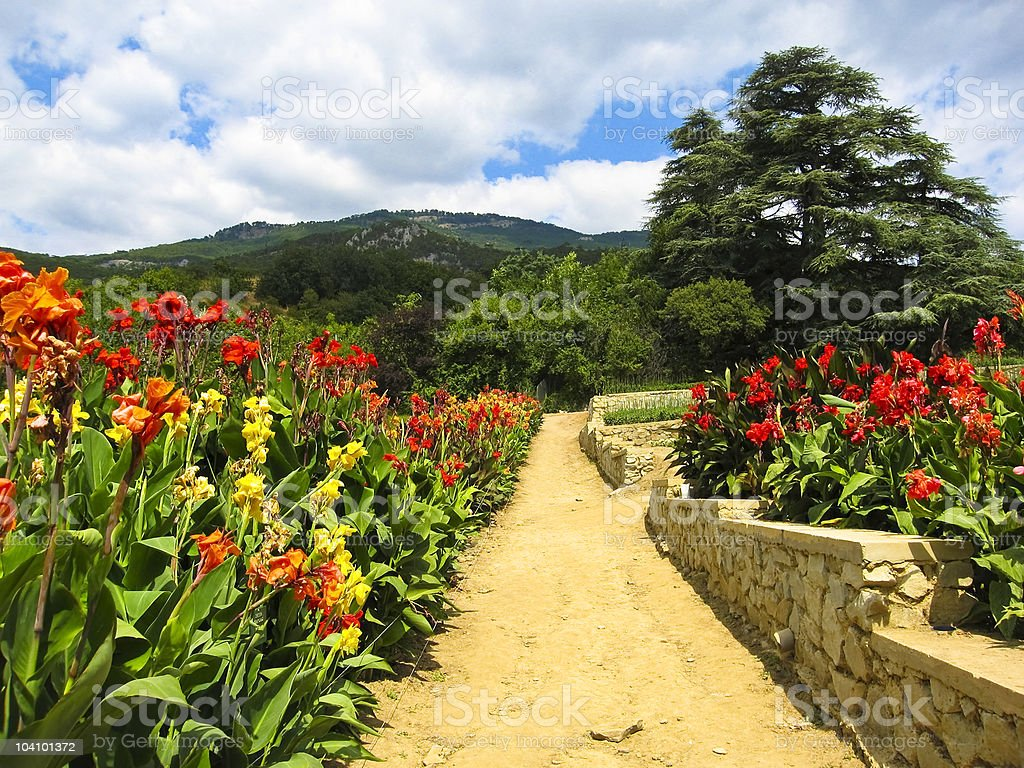 Road to hill with cannas stock photo