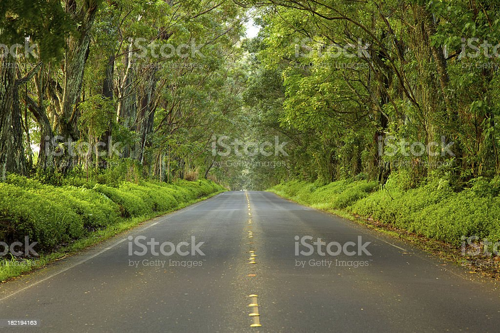 Road to Poipu royalty-free stock photo