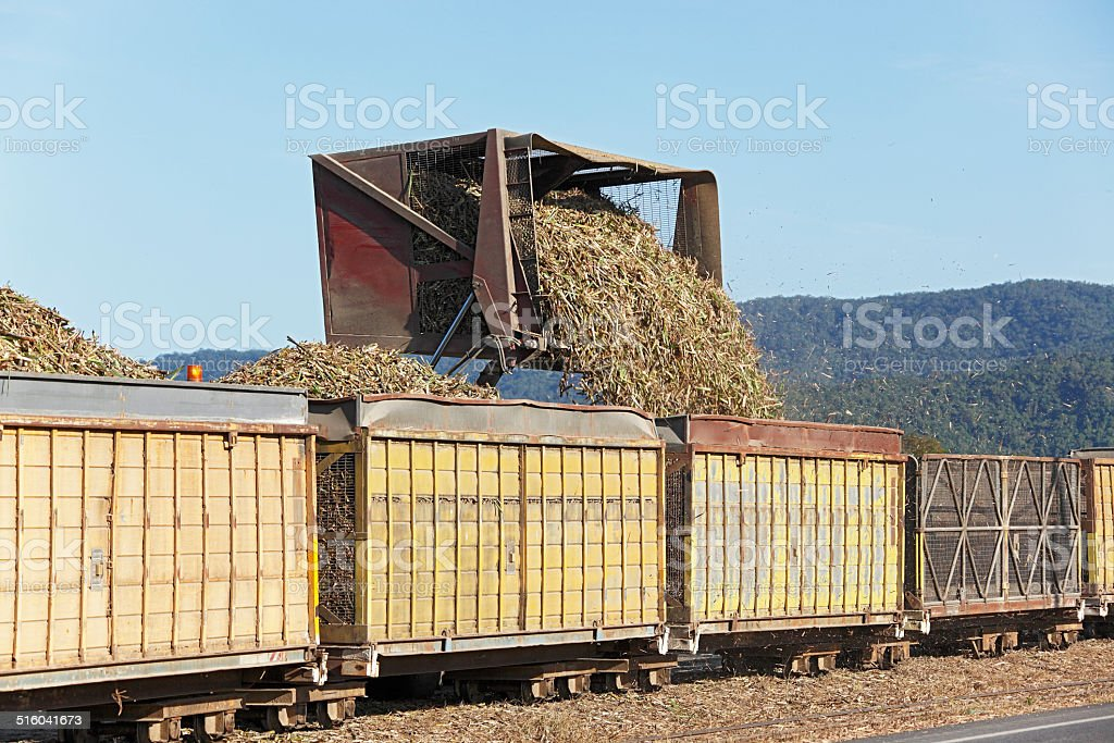 Road to rail transfer of sugar cane for mill delivery stock photo