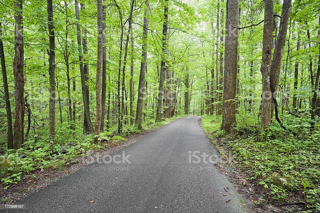 Road to Serenity (XXL) royalty-free stock photo