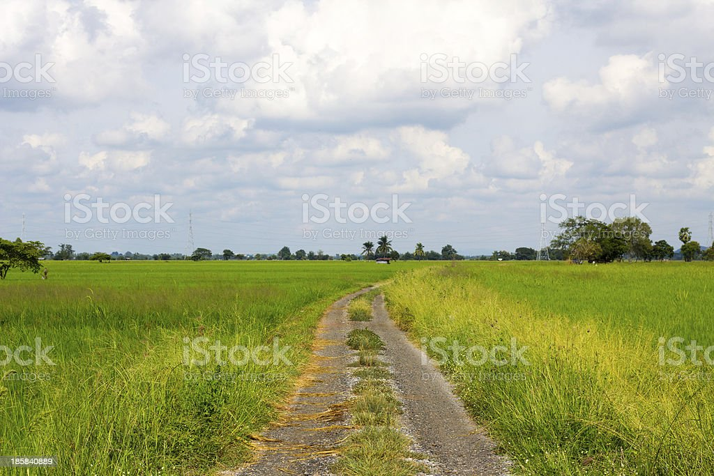 Road to the fields in  countryside. royalty-free stock photo