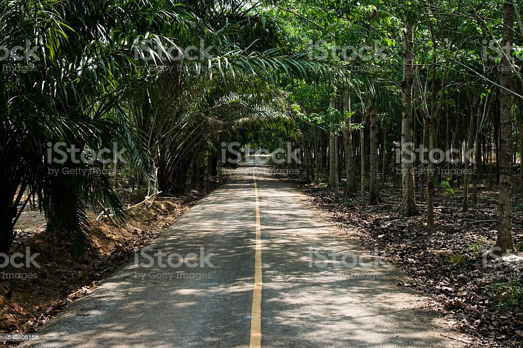 Road to the forest. stock photo