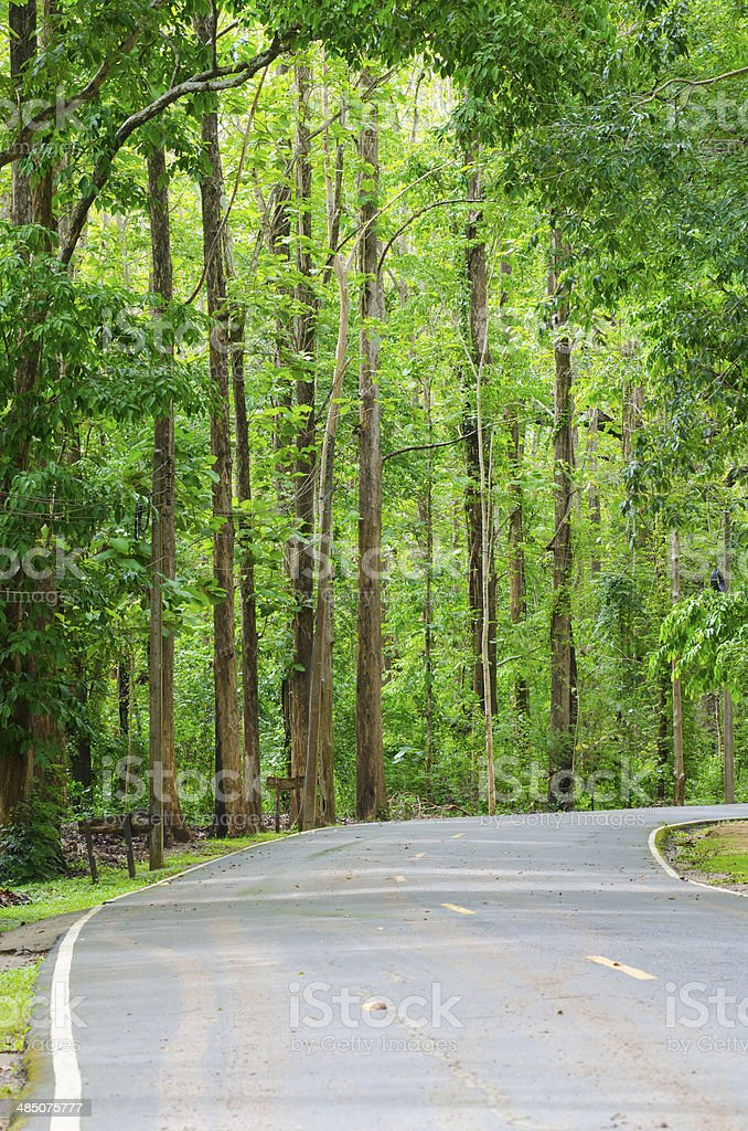 Road to the nature forest stock photo