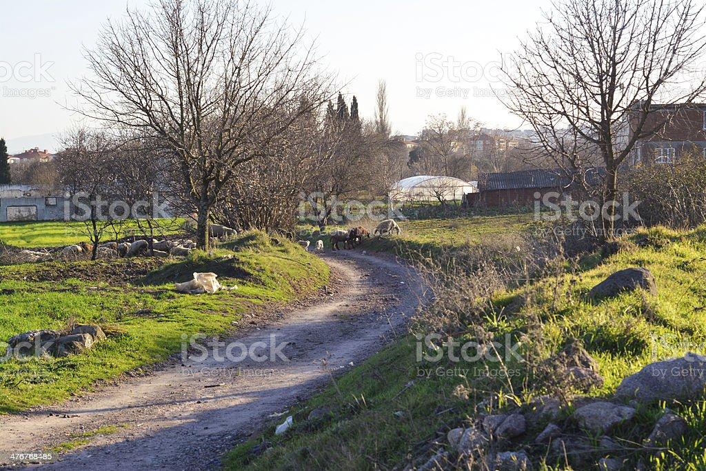 Road, the village Lizenzfreies stock-foto