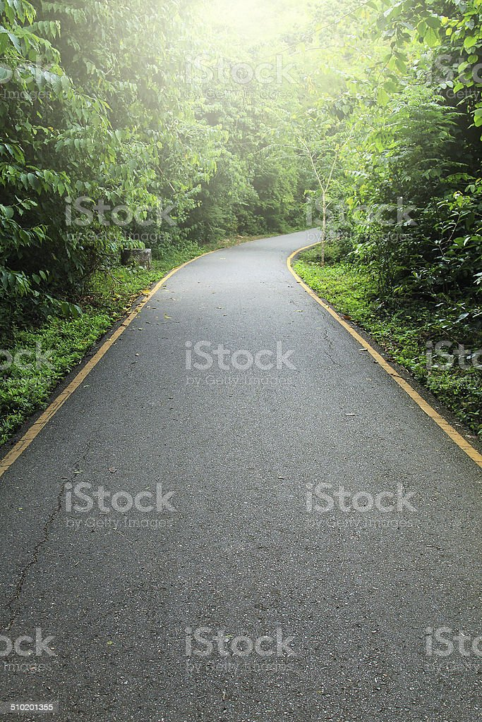 Road to tropical forest stock photo