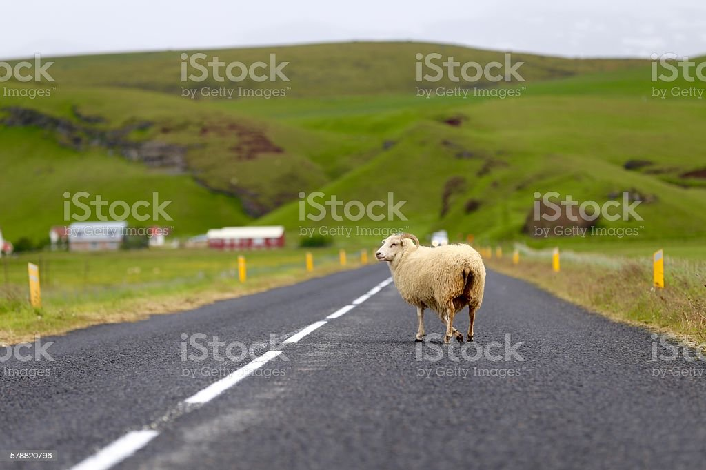 Road Traffic in Iceland stock photo