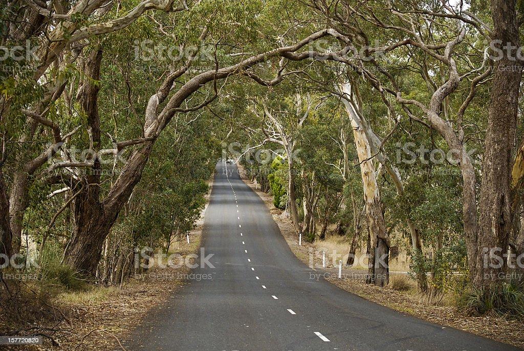 Road trip through the Gum Trees royalty-free stock photo