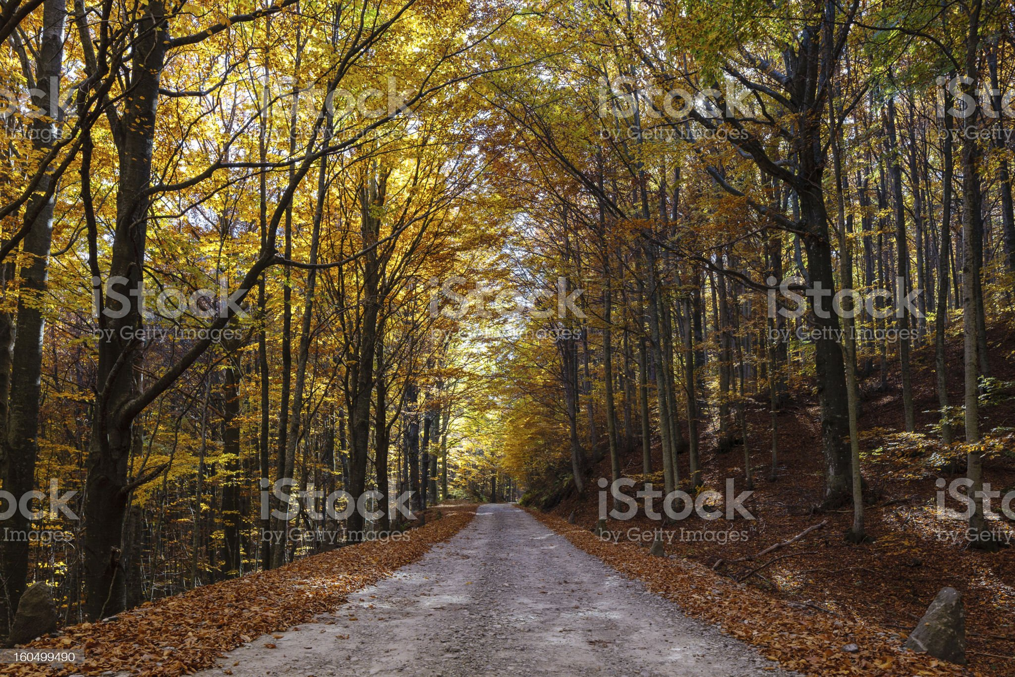 Road under the trees during fall royalty-free stock photo