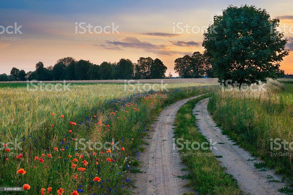 Road wheat field 5 stock photo