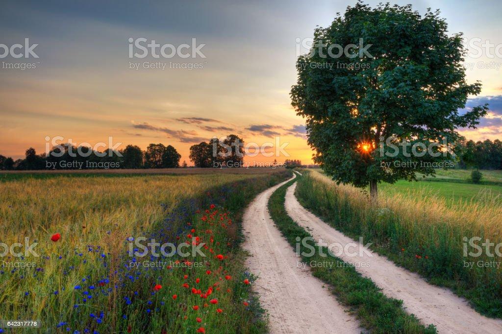 road wheat field 8 stock photo