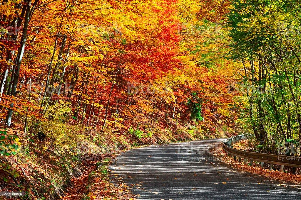 Road winds through autumn forest, Slovakia stock photo