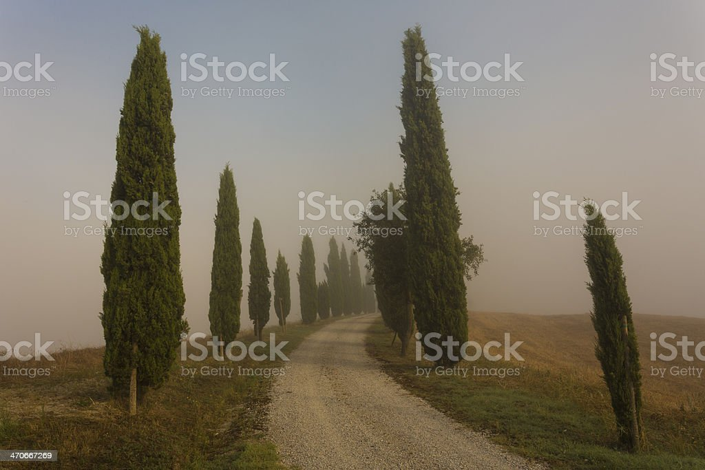 Road with cypress in sunrise stock photo