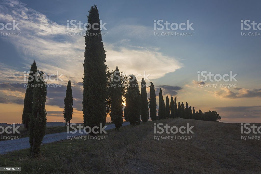 Road with cypress in sunset stock photo